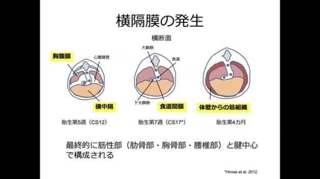 【O-26】拡散テンソルイメージングを応用したヒト胎児の横隔膜形成過程の解析